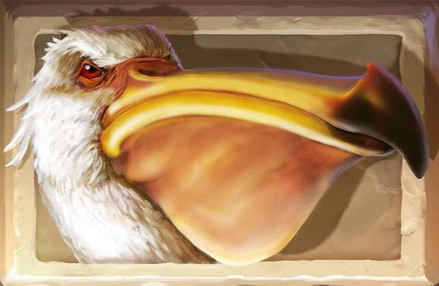 pelican_jumanji